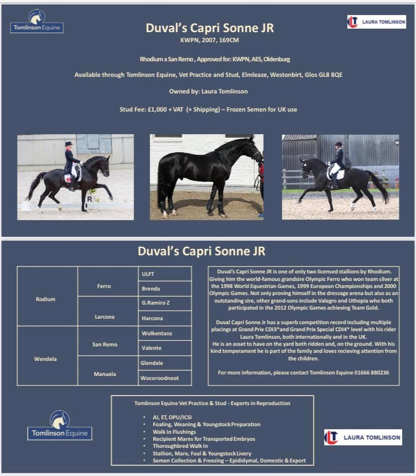 Duval's Capri Sonne JR Available at Stud in UK